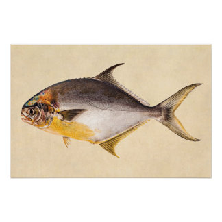Vintage Pompano Fish- Game Fishes Template Blank Poster