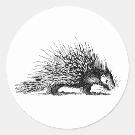 Vintage Porcupine Illustration - 1800's Porcupines Classic Round Sticker