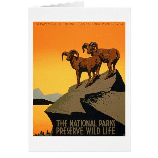 VIntage Preserve Wildlife Poster Cards