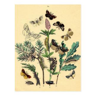 Vintage Print - Bohemian Moths & Butterflies Postcard