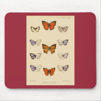 Vintage Print - New Indian lepidoptera Mouse Pad