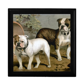 Vintage print of a pair of BullDogs Large Square Gift Box