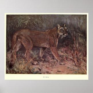Vintage Puma Painting (1909) Poster