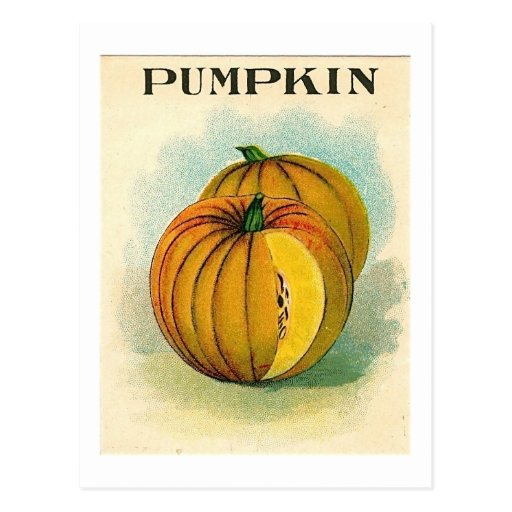 vintage pumpking seed packet postcard