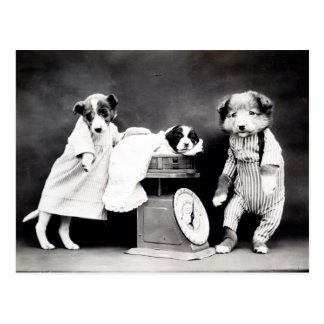 Vintage Puppies and Kittens Postcard