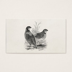 Retro game business cards business card printing zazzle uk vintage quail birds personalised retro game bird business card reheart Choice Image