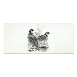 Vintage Quail Birds - Personalized Retro Game Bird Card