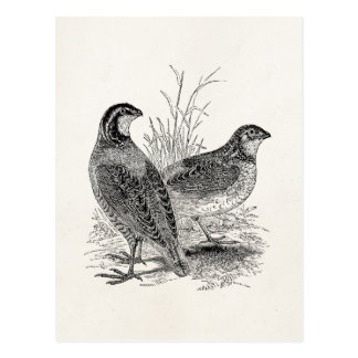Vintage Quail Birds - Personalized Retro Game Bird Postcard