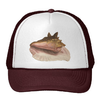 Vintage Queen Conch Shell Seashell, Marine Animal Cap