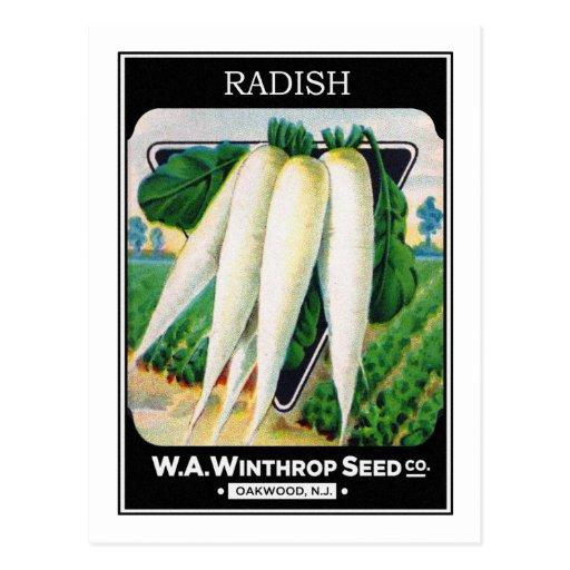 Vintage Radish Seed Package Label Postcards
