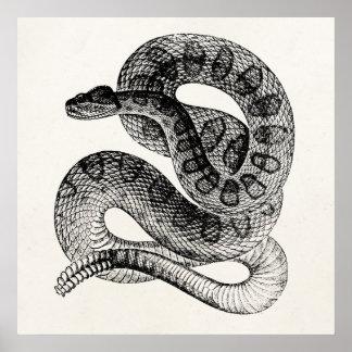Vintage Rattlesnake Reptile Snake Template Poster