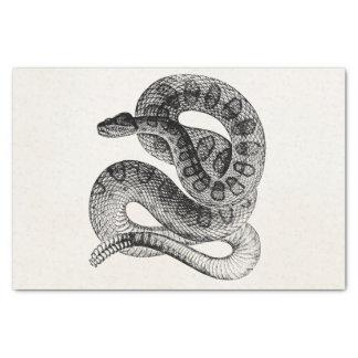 Vintage Rattlesnake Reptile Snake Template Tissue Paper