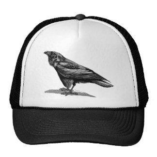 Vintage Raven Crow Blackbird Bird Illustration Cap