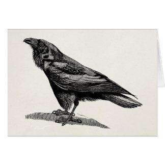 Vintage Raven Crow Blackbird Bird Illustration Card