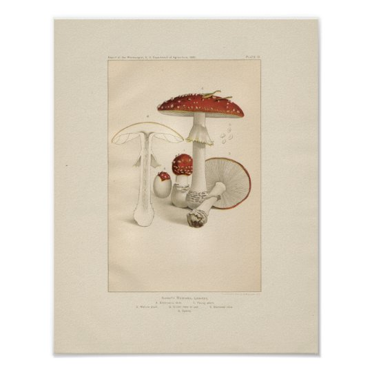 Vintage Red and White Mushrooms Print