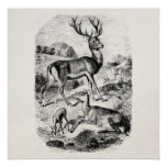 Vintage Red Deer Stag w/ Doe and Fawn Personalised Poster