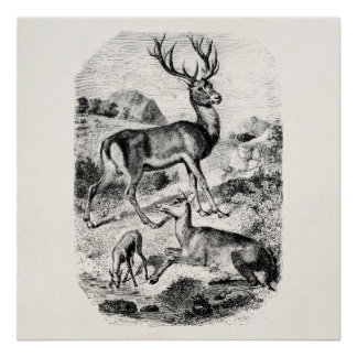 Vintage Red Deer Stag w/ Doe and Fawn Personalized Poster