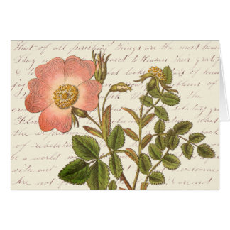 Vintage Red French Rose Thank You Notes Note Card