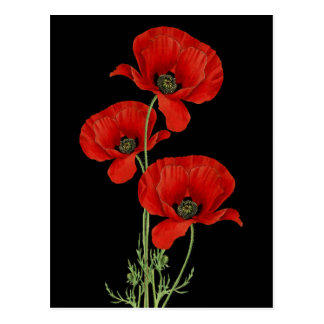 Vintage Red Poppies Botanical Postcard
