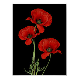 Vintage Red Poppies Botanical Print