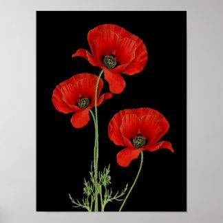 Vintage Red Poppies Botanical Print