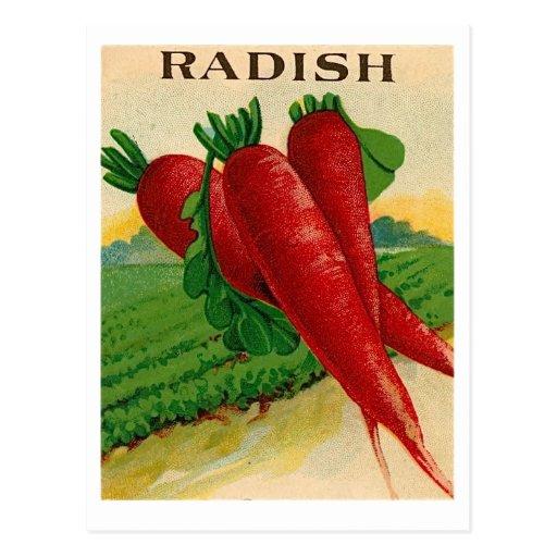 vintage red radish seed packet postcard