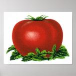 Vintage Red Ripe Tomato, Food Fruits Vegetables Poster