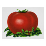 Vintage Red Ripe Tomato, Fruits and Vegetables Poster