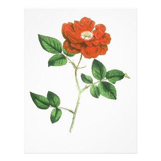 Vintage Red Rose Illustration 21.5 Cm X 28 Cm Flyer