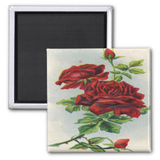 Vintage, Red Roses, Girlfriend Birthday Square Magnet
