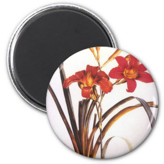 Vintage Redoute Red Lilies Magnet
