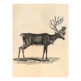 Vintage Reindeer Illustration -1800's Christmas Postcard
