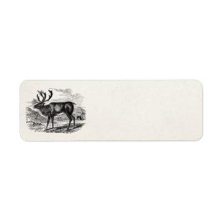 Vintage Reindeer Personalized Deer Illustration