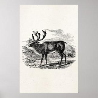 Vintage Reindeer Personalized Deer Illustration Poster