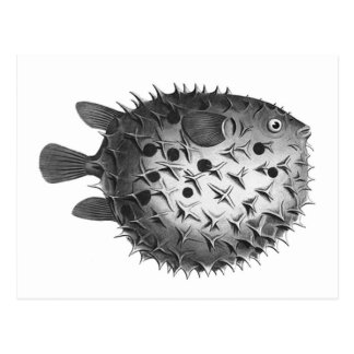 Vintage Retro Illustration Pufferfish Postcard