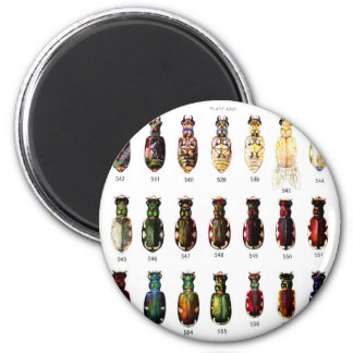 Vintage Retro Kitsch Insects Bettles Illustration 6 Cm Round Magnet