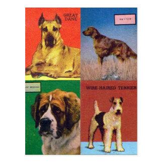 Vintage Retro Kitsch Matches Dog Breeds Postcard