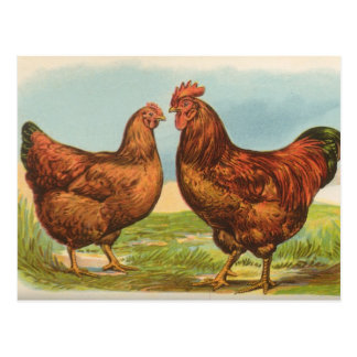 Vintage Rhode Island Red Chicken Postcard
