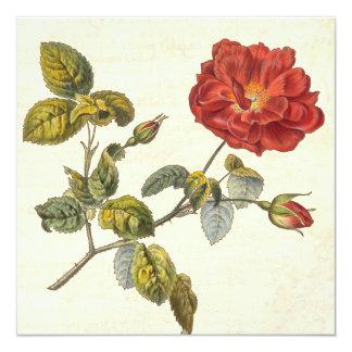 Vintage Rose Botanical Birthday Garden Party 13 Cm X 13 Cm Square Invitation Card