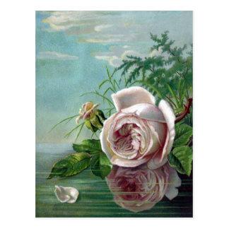 Vintage Rose Hanging Over Water Postcard