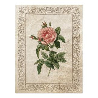 Vintage Rose I postcard