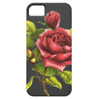 Vintage Rose on gray iPhone 5 Case