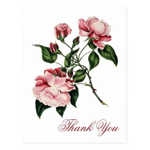 Vintage Rose Thank You Postcard