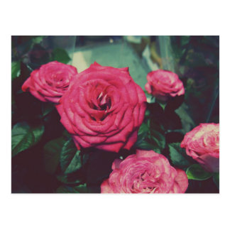 Vintage Roses I Postcard