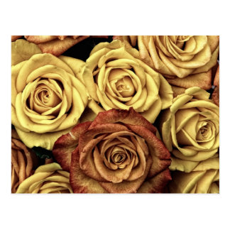 Vintage Roses Post Cards