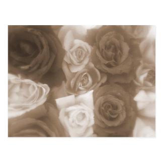 Vintage Roses Soft Sepia Postcards