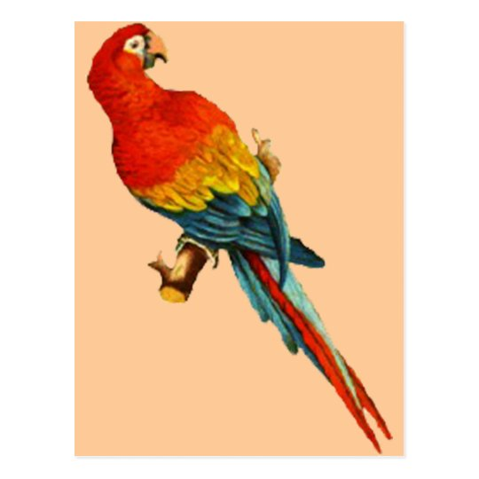 Vintage *Scarlet Macaw* Parrot Desing Postcard