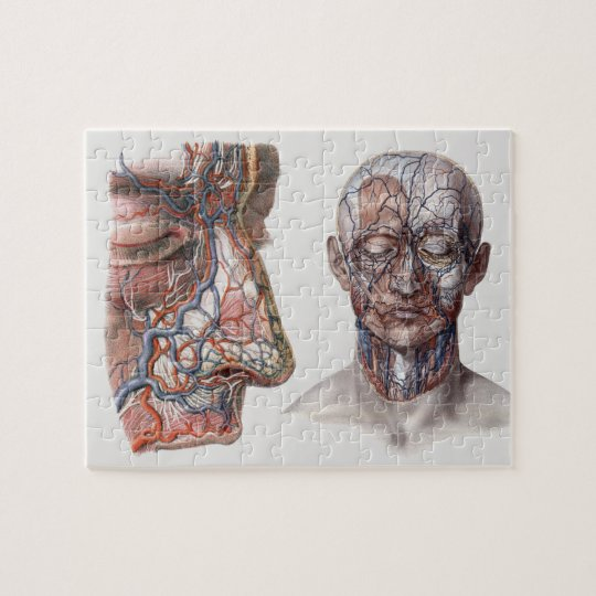 Vintage Science Human Anatomy Heads and Faces Jigsaw Puzzle | Zazzle ...