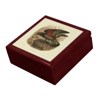 Vintage Science NZ Birds - Kea Gift Box