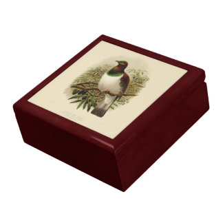 Vintage Science NZ Birds - Kereru Gift Box